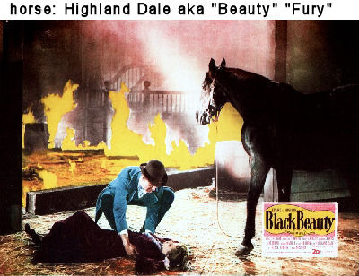 image fury in Black Beauty