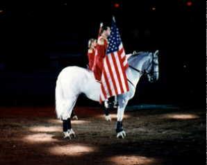 horse image 2