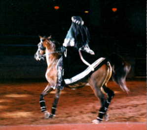 horse image 3