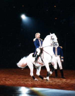 horse image 5