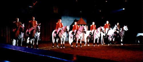 horse image 6