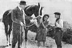 image cast of National Velvet movie