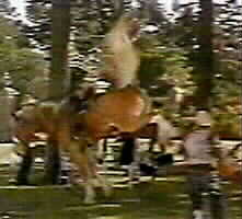 peaceful bucking stunt horse