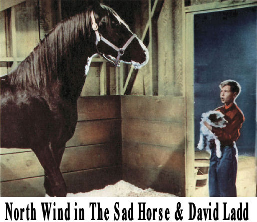 Sad Horse Movie